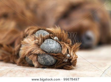 Cute Dog Paw