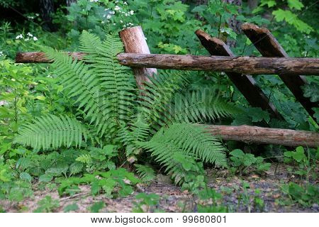Fern on wooden fence background