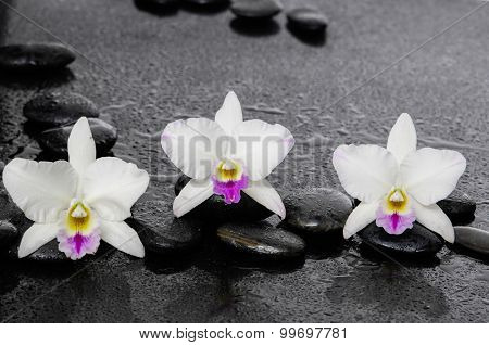 Three white orchid flowers with therapy stones