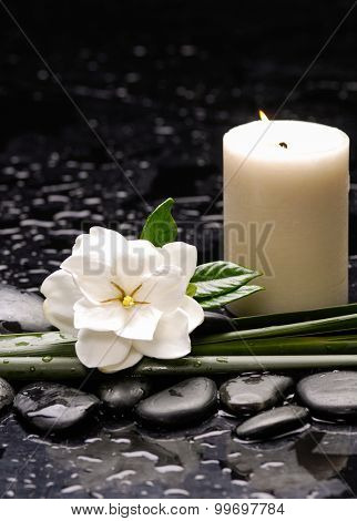 Still life with gardenia flowers with candle on therapy stones
