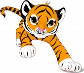 picture of white tiger cub  - Vector Image of running cute baby tiger - JPG