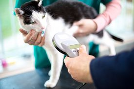 picture of microchips  - Veterinarian identify cat by microchip implant - JPG