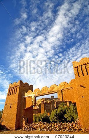 Africa  In Histoycal Maroc  Old Plant Cloudy  Sky