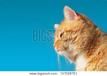 Red Cat On A Background Of Blue Sky In Profile