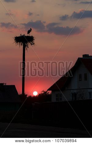 Sunset Silhouettes Of White Storks Pair Taking Care Of Future Offspring In Big Nest