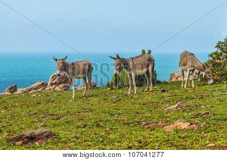 Donkeys In Jericoacoara, Brazil