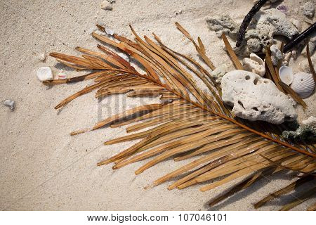 Palm Leaf And Shells On The Sand
