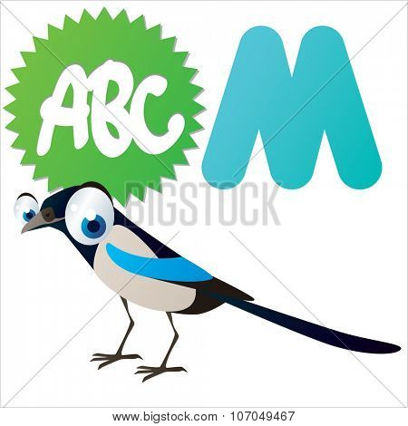 vector cartoon funny animals alphabet: M is for Magpie