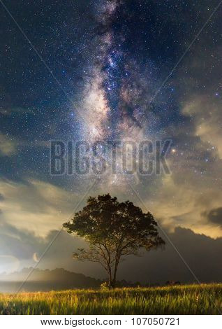 The Milky Way And The Tree Stand Alone