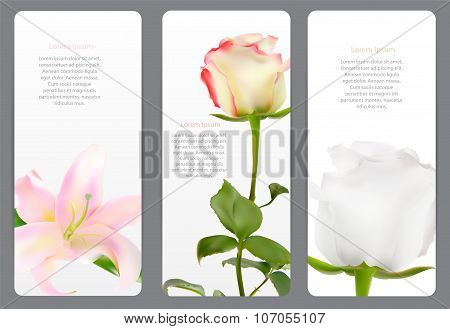 Beautiful Floral Cards with  Realistic Flowers Rose and Lilly Ve