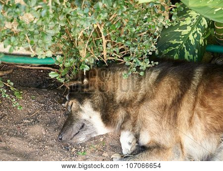 Dog Lay Down Under The Tree