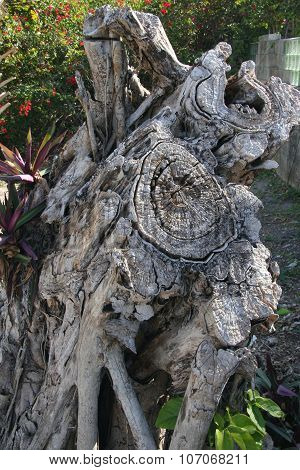 Gnarled and notty dead tree trunk