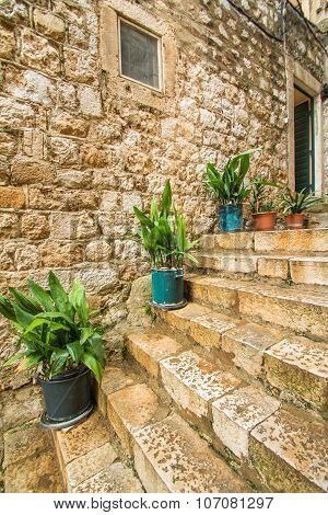 Plants and flowers in narrow street in the Old Town in Dubrovnik, Croatia, mediterranean ambient
