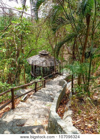 Trekking trail leading through jungle landscape of deep tropical rain forest.