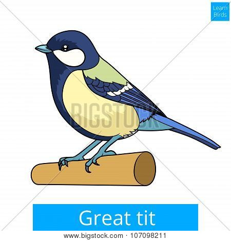 Great tit learn birds educational game vector
