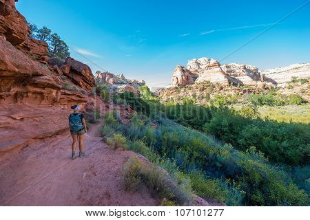Hiker On A Calf Creek Canyon Trail