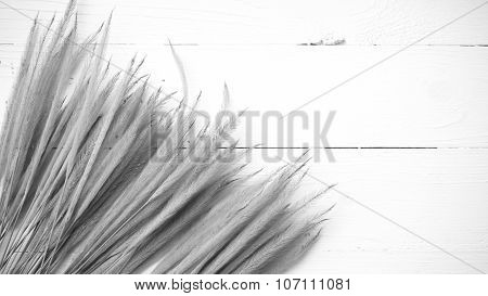 Wheat Black And White Color