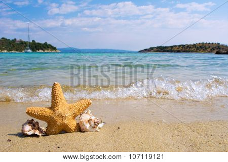 Starfish and shells on a beach with waves in a background