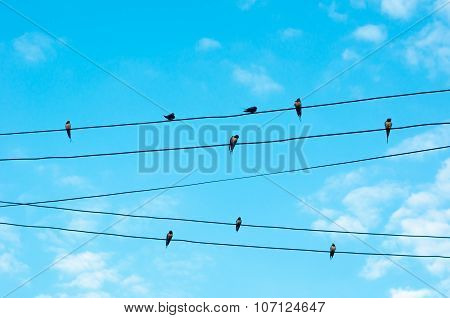 Many Sparrow Bird On An Electric Wires. Doves Sitting On A Power Lines Over Sky