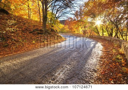 Autumn road in mountain forest.