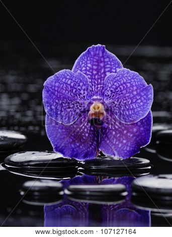Beautiful purple orchid and therapy stones