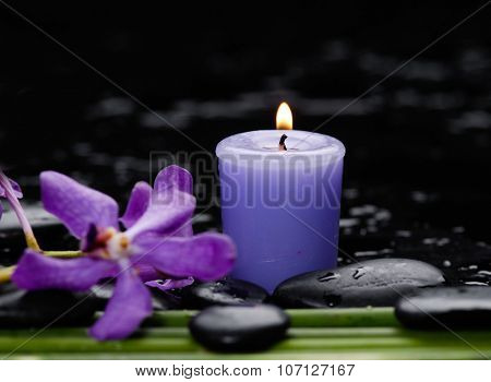 orchid with long leaf and stones, candle on wet background