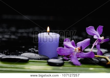 Branch orchid with long stem and stones ,candle on wet background