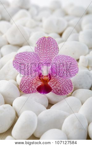 Beautiful pink orchid with pile of white stones