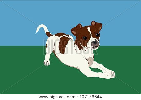 Jack Russell Chihuahua Puppy Illustration