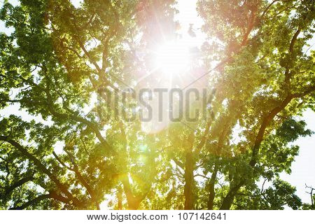 Sunlight And Background Tree Bokeh