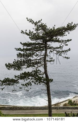 Solitary Tree Opposite To The Sea
