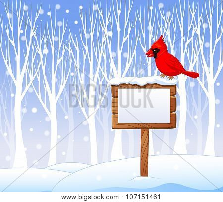 Cartoon cardinal bird on the blank sign with winter background