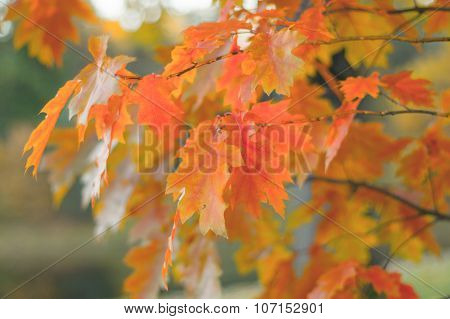 Colorful Branches Of Champion Oak