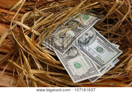 dollar Banknote in nest eggs, Growing of business and genesis Business, New business starting