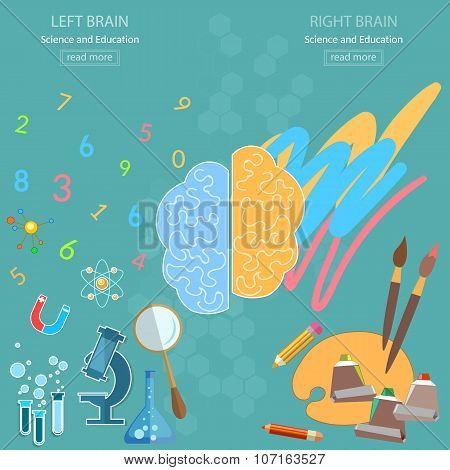 Left And Right Brain Analytical And Creativity Back To School Sciences And Arts Vector Concept