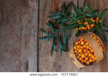 Autumn harvest of useful berries