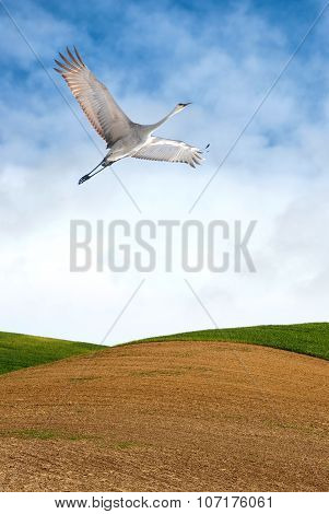 Beautiful Tropical Crane Vertical Image