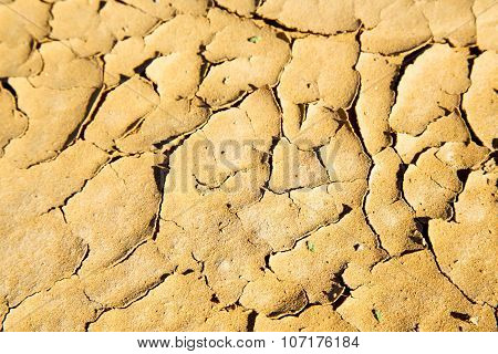 Brown Dry Sand In   Abstract