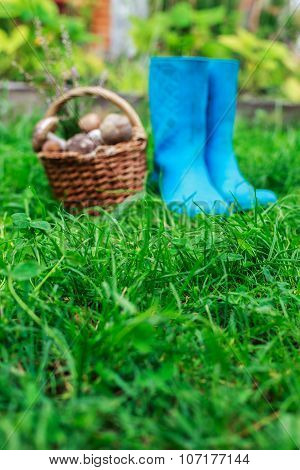 Blue rubber boots and a basket full of mushrooms on a grass background.