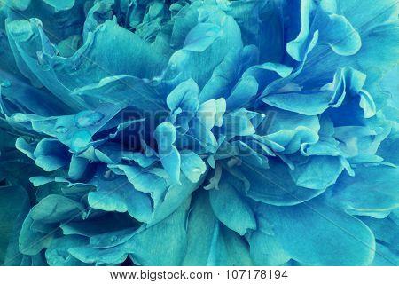 Blue flower peony background
