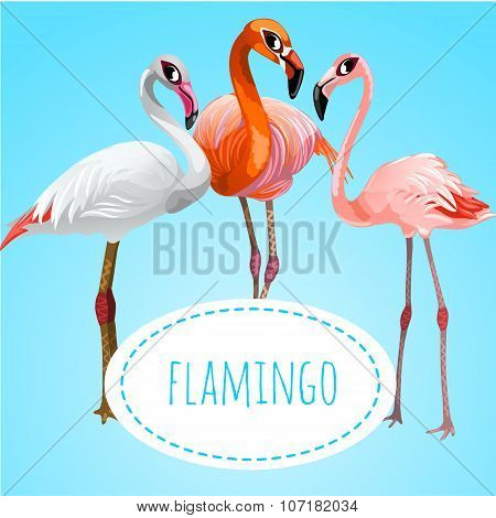 Three beautiful flamingos on a blue background