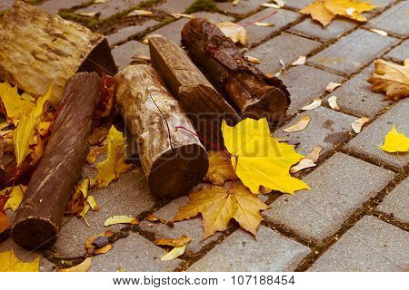 Autumn. Logs Of Wood Lying On The Pavement. Yellow Maple Leaves Flew Off The Trees.