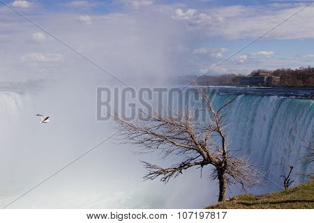 Background With A Tree, Gull And The Niagara