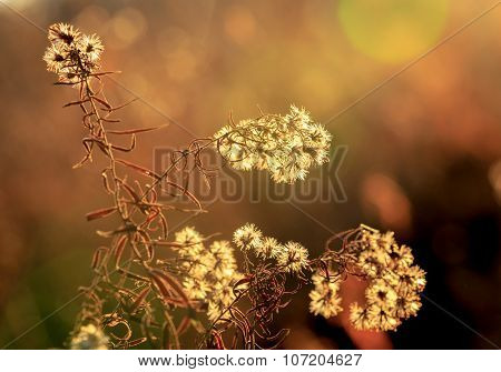 dry autumn flower meadow soft photo
