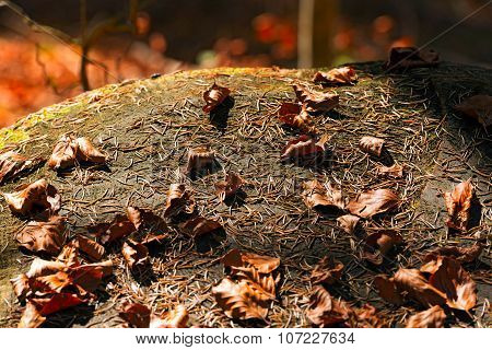 Pine Needles And Dry Leaves