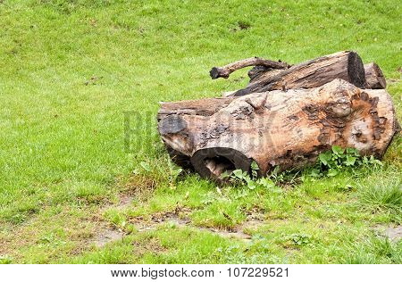 Felled  Tree On A Glade
