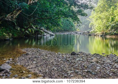 Small Nature Jungle River