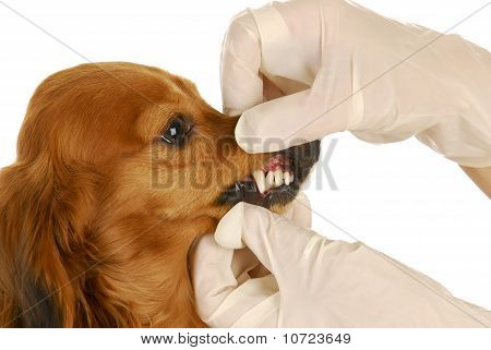 Veterinary Examination