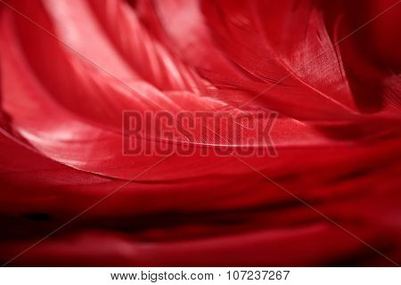 red feathers macro shot