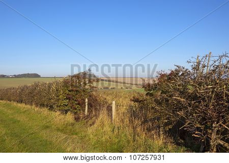 Hedgerow With Berries